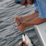 Maine charter fishing