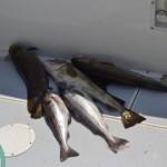 groundfishing in Maine, deep sea fishing in MAine