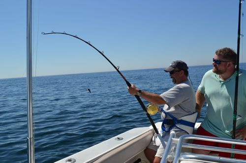Shark on maine ocean adventures for Maine deep sea fishing charters