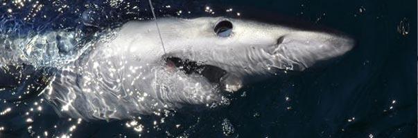 Maine deep sea fishing offers boat charters custom for Deep sea fishing trips near me